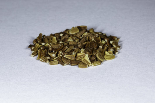 An angled front view of a small pile of Chrysanthemum Coronarium seed.