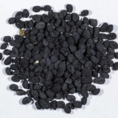 A top down view of a small pile of Scutellaria baicalensis (Baikal skullcap) seeds.
