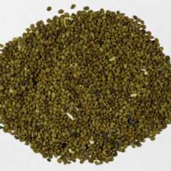 A top view of a small pile of Scutellaria lateriflora (Mad Dog Skullcap) seeds.