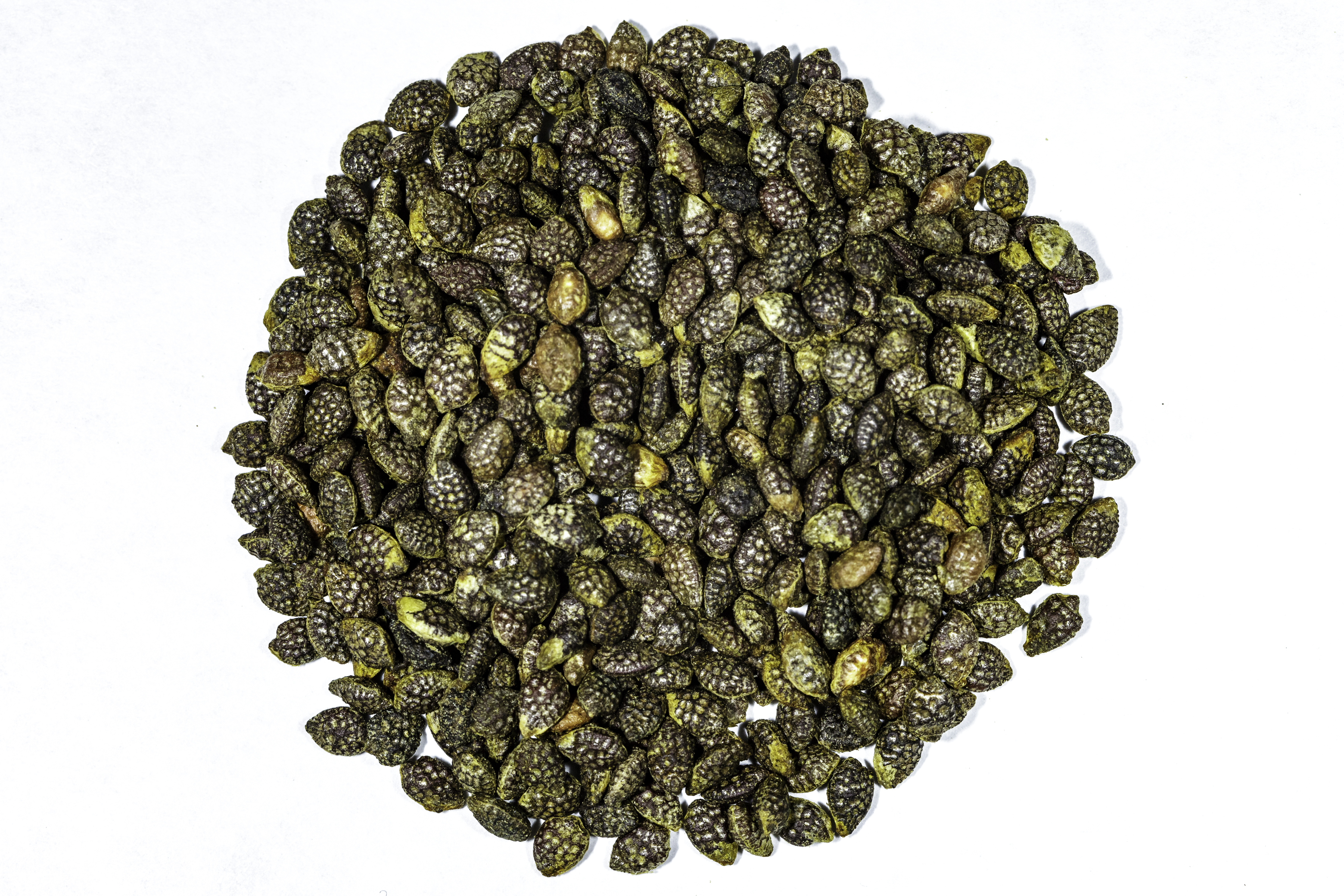 A top down view of a small pile of Passiflora caerulea (Blue Passionflower) seeds.