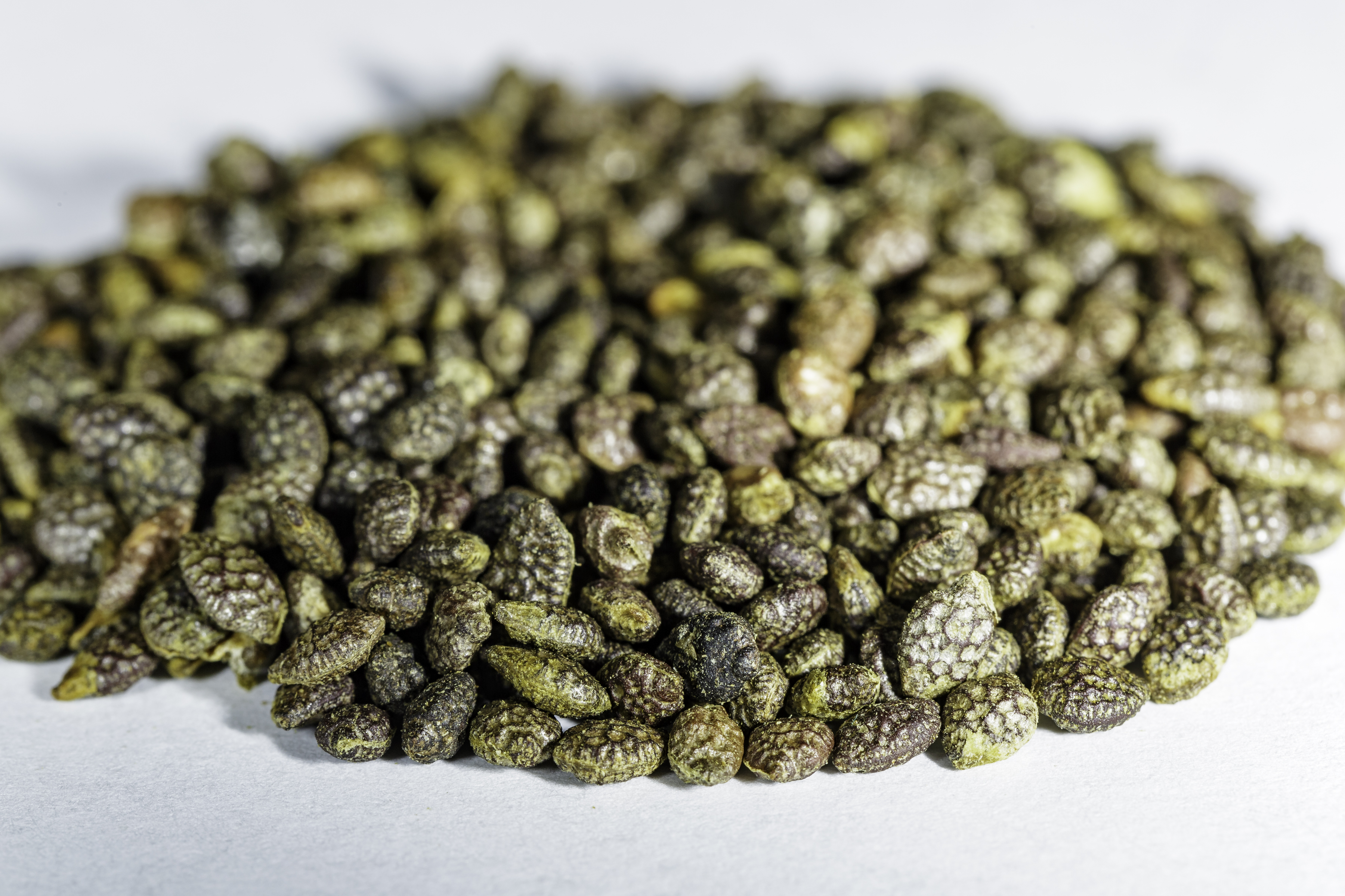 An angled front view of a small pile of Passiflora caerulea (Blue Passionflower) seeds.