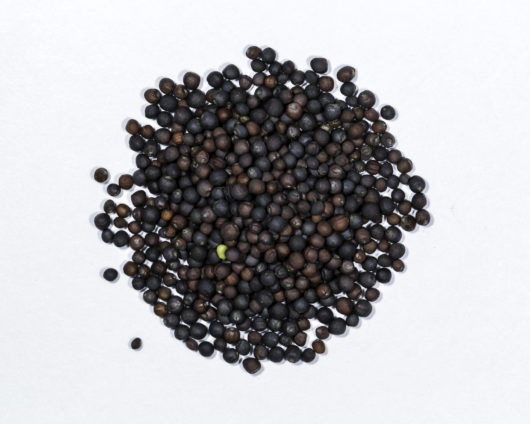 A top down photograph of a small pile of heirloom Red Russian kale seeds.