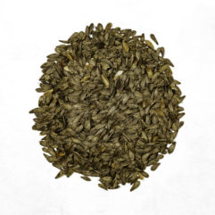 A top down photograph of a small pile of organic heirloom Tom Thumb lettuce seeds.