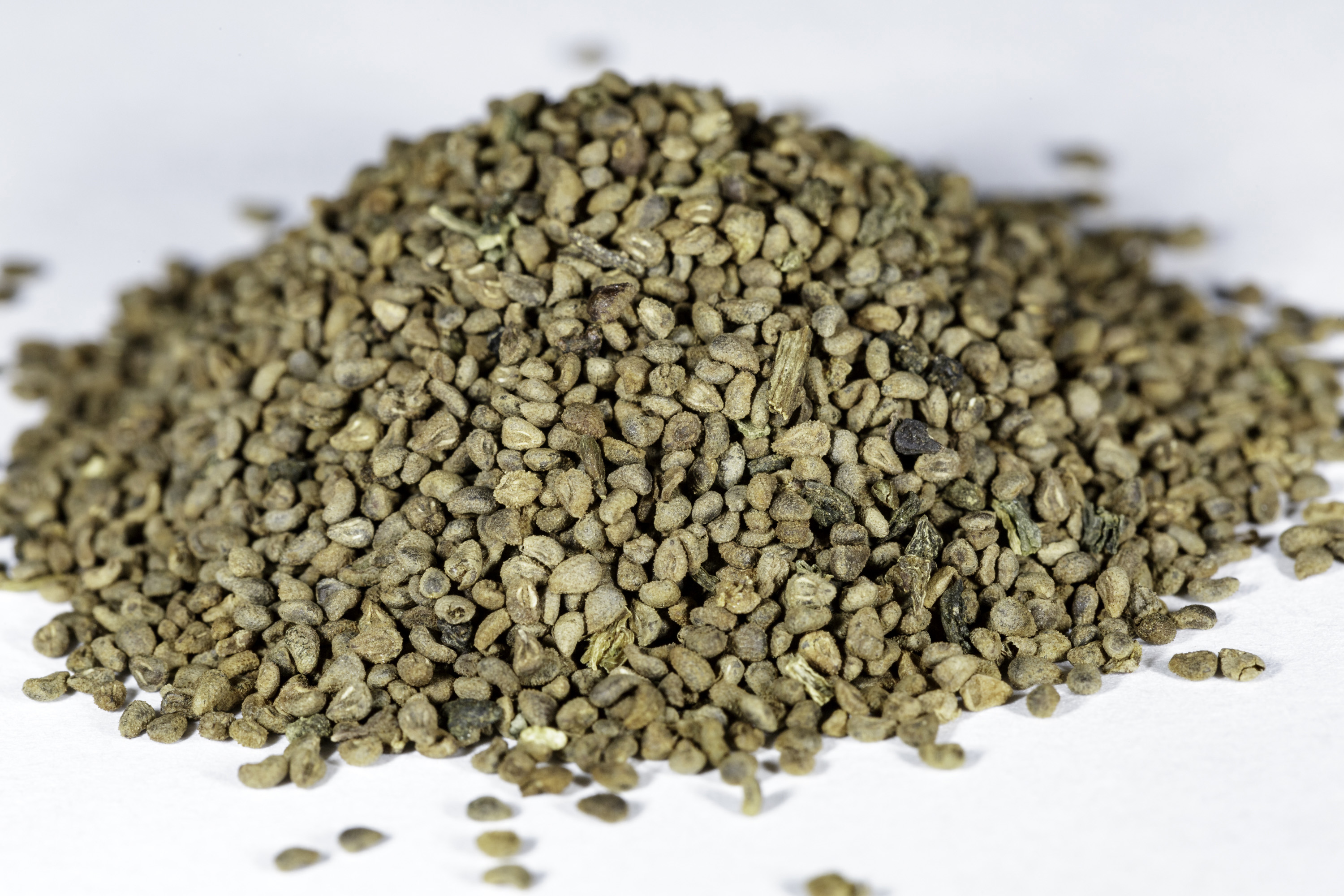 A front angle view of a small pile of Lopezia racemosa (Mosquito Flower) seeds.