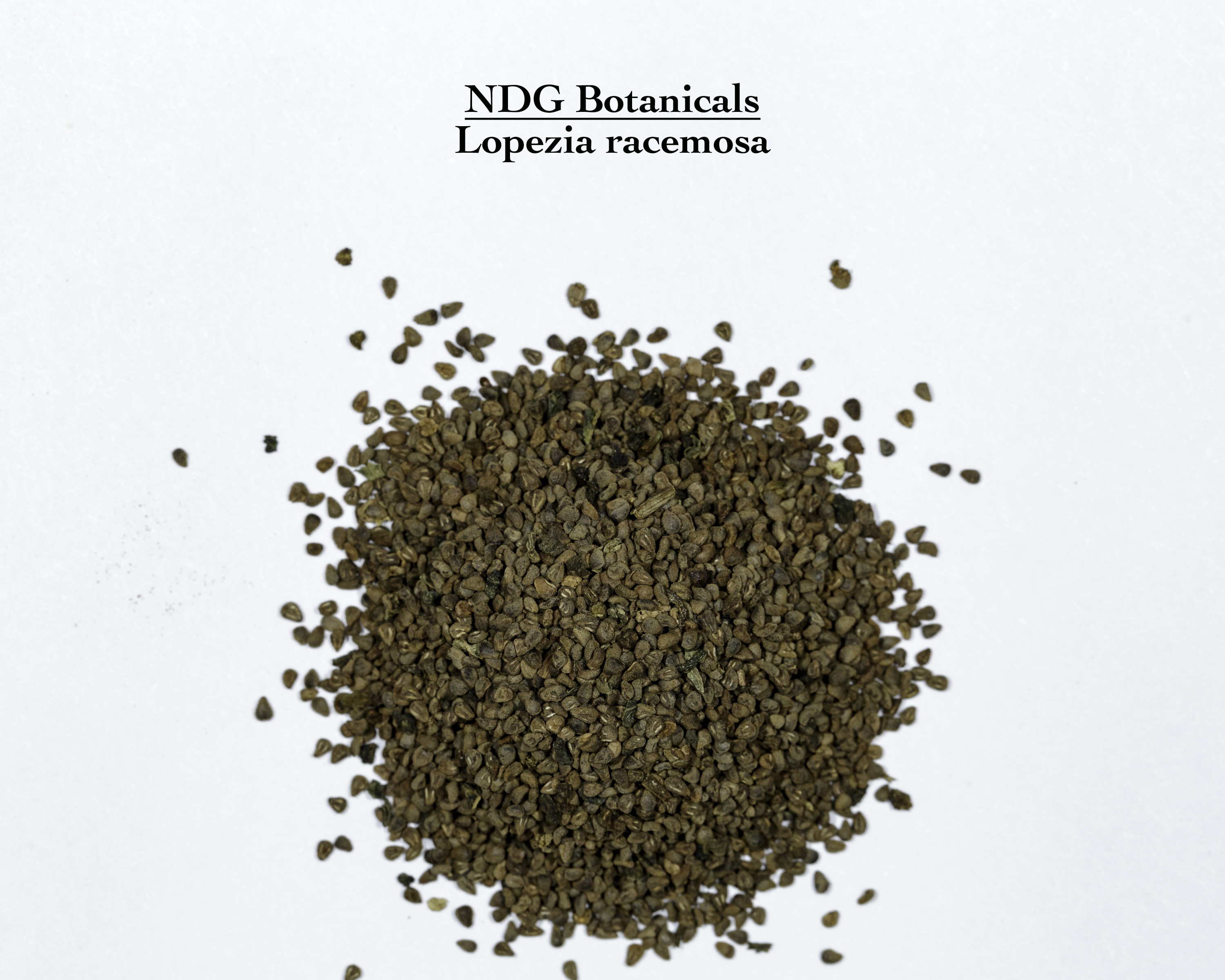 A top down view of a small pile of Lopezia racemosa (Mosquito Flower) seeds.