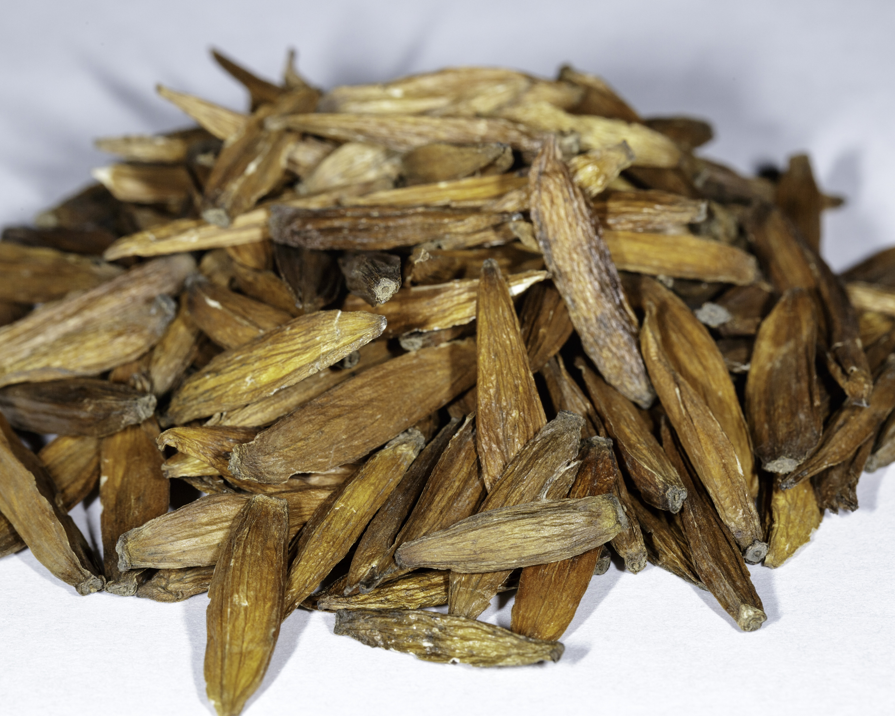 A front angle view of a small pile of Camptotheca acuminata (Cancer Tree) seeds.