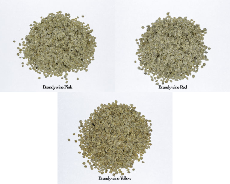 A photograph of a pile of seeds for Brandywine Pink, Brandywine Red, and Brandywine Yellow Seeds.