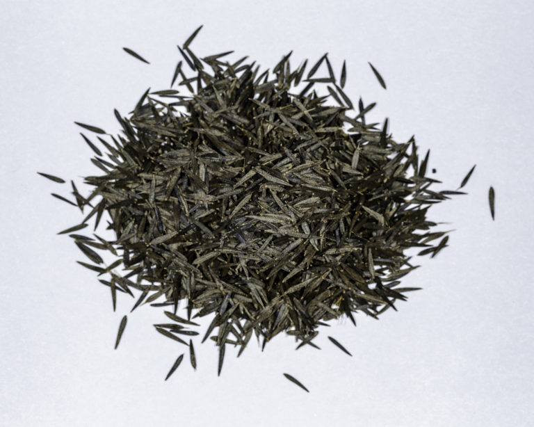 A top down view of a small pile of Huacatay/Black Mint seeds.